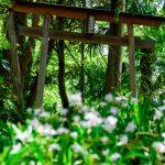 羊山公園 大山祇神社